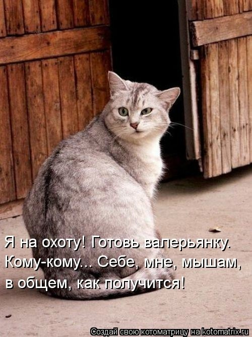 kotomatritsa_G (500x668, 165Kb)
