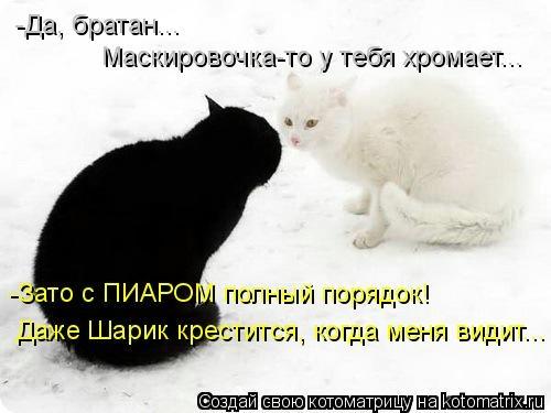 kotomatritsa_j8 (500x375, 78Kb)