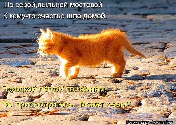 kotomatritsa_rla (700x499, 321Kb)