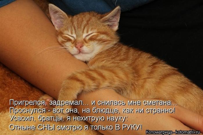 kotomatritsa_-z (700x466, 222Kb)