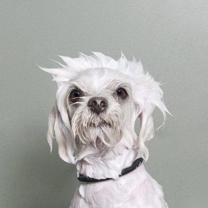 смешные собаки фото (680x680, 210Kb)