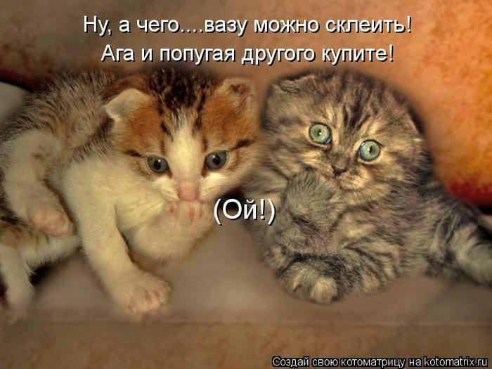 kotomatritsa_nG (700x525, 230Kb)