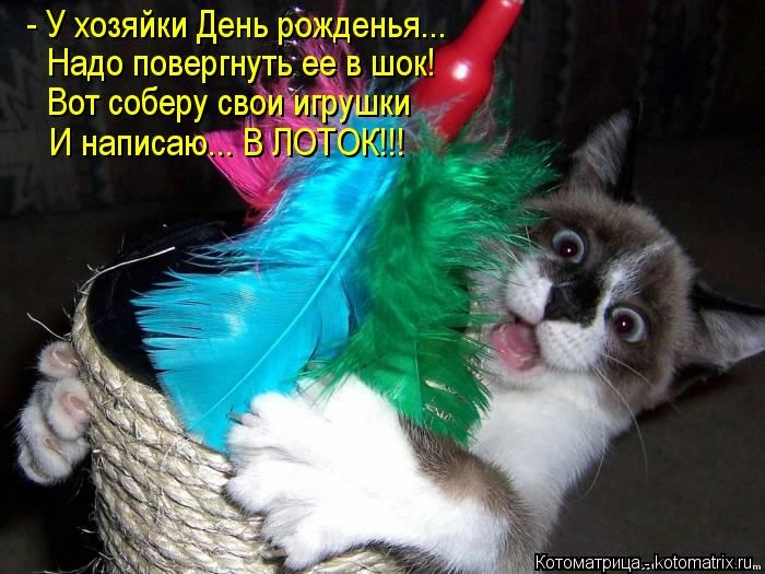 kotomatritsa__u (700x525, 177Kb)