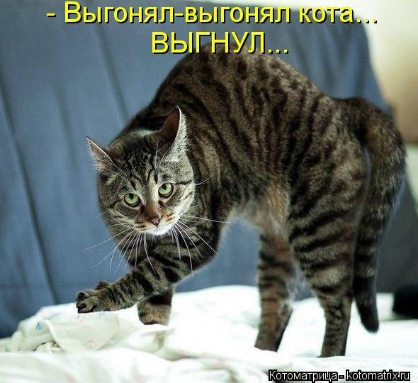 kotomatritsa_1x (590x540, 145Kb)