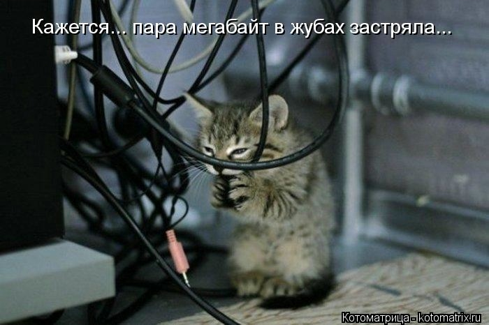kotomatritsa_Iq (700x466, 118Kb)