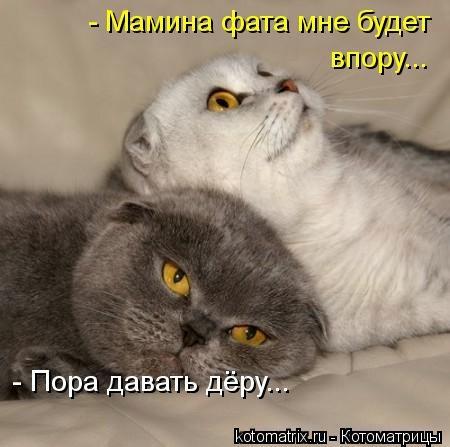 kotomatritsa_jI (450x447, 76Kb)