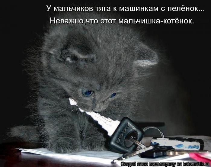 kotomatritsa_PF (700x553, 204Kb)
