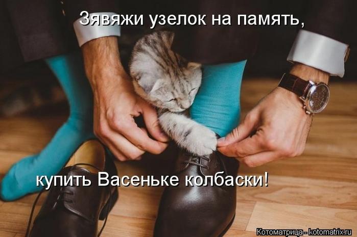 kotomatritsa_qy (700x465, 191Kb)