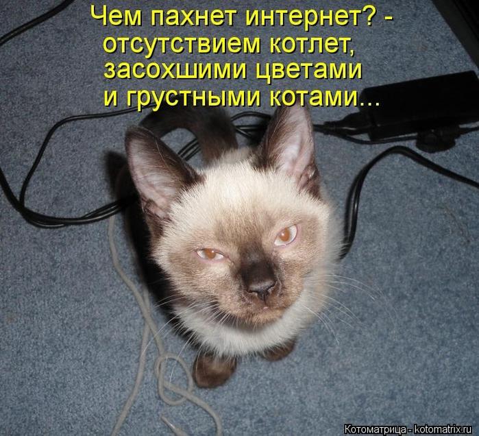 kotomatritsa_UX (700x636, 339Kb)