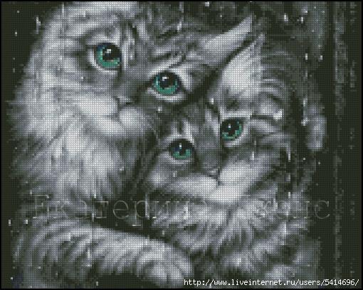 Котики цветные (510x408, 204Kb)