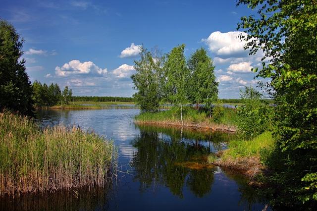 foto-i-nazvaniya-rastenij-lesa (640x426, 109Kb)