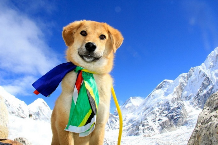 dog-mount-everest-6 (700x467, 115Kb)