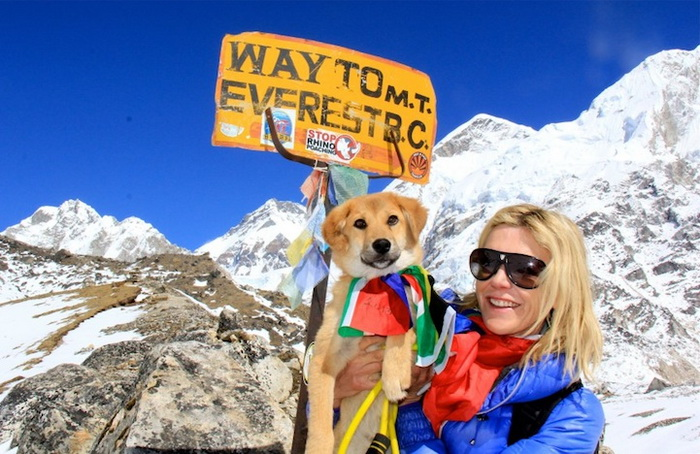 dog-mount-everest-5 (700x454, 151Kb)