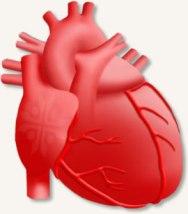 Неотложные состояния в кардиологии/4574032_kardio (188x214, 8Kb)