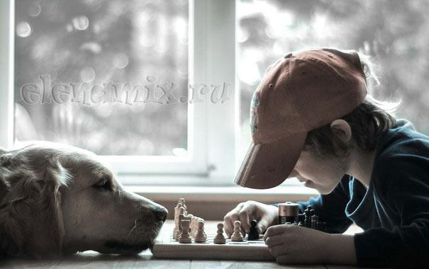 игра в шахматы/4348076_151686 (605x380, 41Kb)