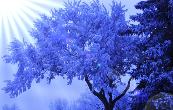 деревья в инее 16 (596x380, 349Kb)