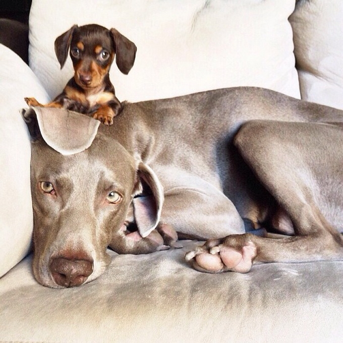 смешные собаки фото 2 (680x680, 293Kb)