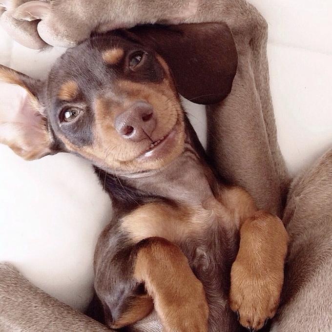 смешные собаки фото 10 (680x680, 323Kb)