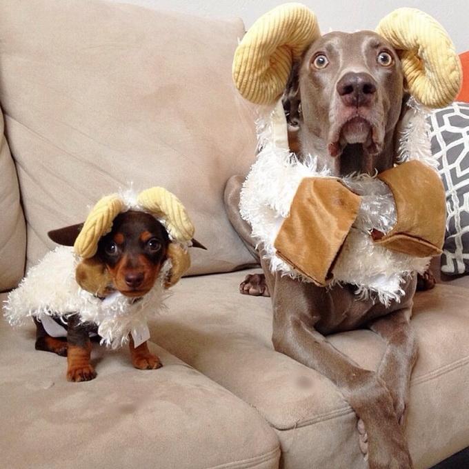 смешные собаки фото 11 (680x680, 284Kb)