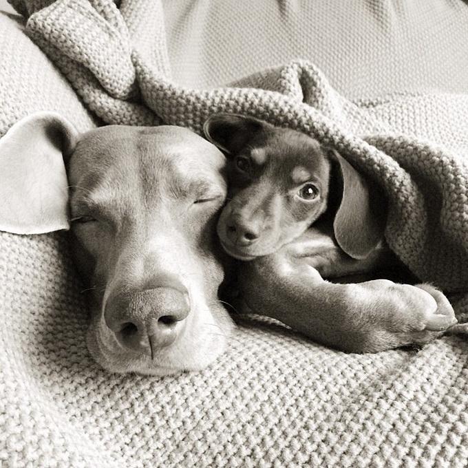 смешные собаки фото 12 (680x680, 348Kb)