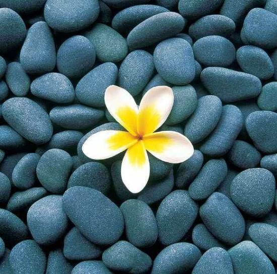 1384386818_tJR889M_ErQquv_flower_stones (550x545, 112Kb)