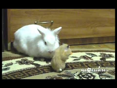 хомяк кролик и морковка