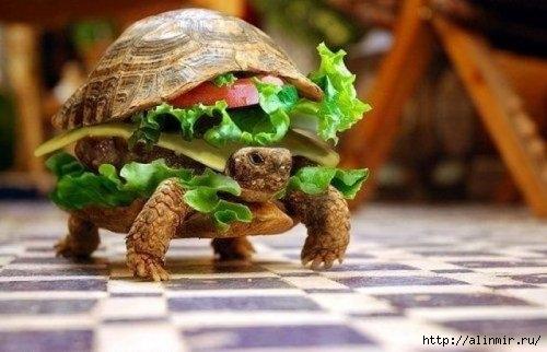 черпаха бутерброд (500x322, 104Kb)