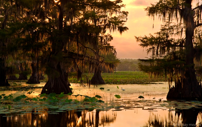 озеро каддо фото 12 (700x440, 450Kb)