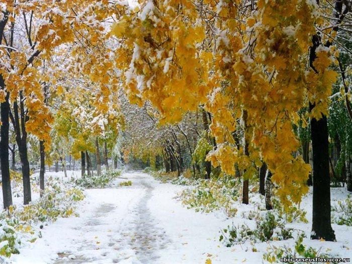 зима (700x525, 123Kb)