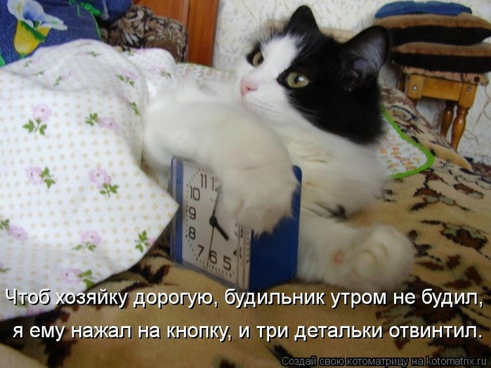 kotomatritsa_3b (700x524, 241Kb)