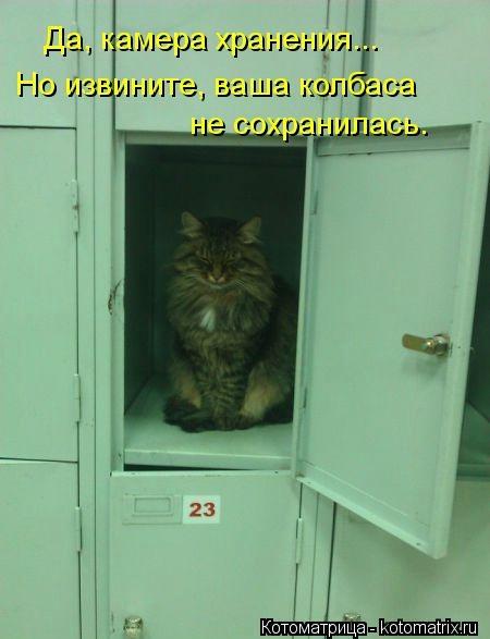 kotomatritsa_BX (450x587, 86Kb)