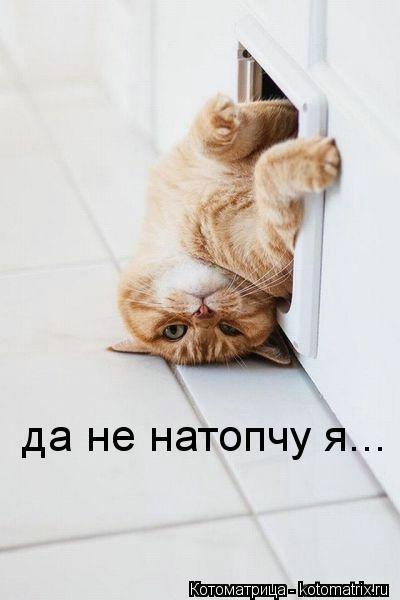 kotomatritsa_h8 (400x600, 61Kb)