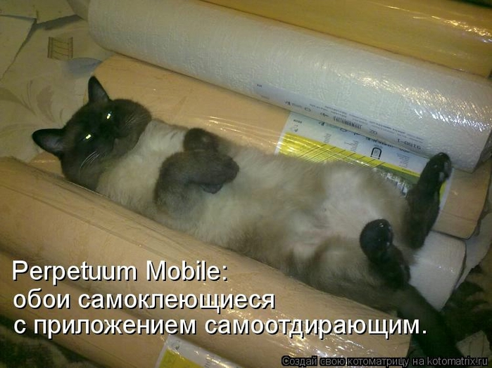 kotomatritsa_q (700x524, 236Kb)
