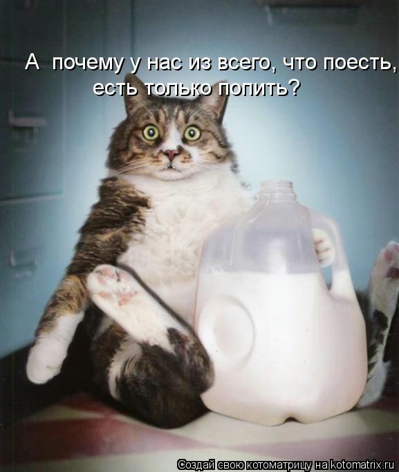 kotomatritsa_sD (577x683, 110Kb)