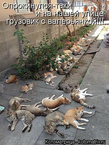kotomatritsa_wK (360x480, 136Kb)