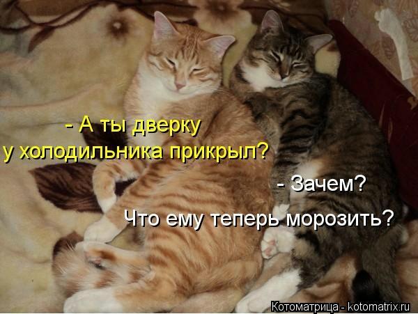 kotomatritsa_WG (600x451, 120Kb)