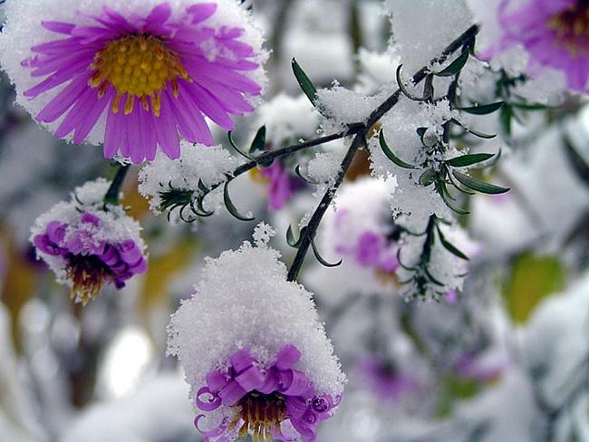 первый снег2 (650x488, 235Kb)