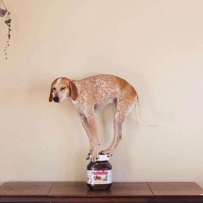 балансирующая собака мэдди фото 1 (680x680, 147Kb)