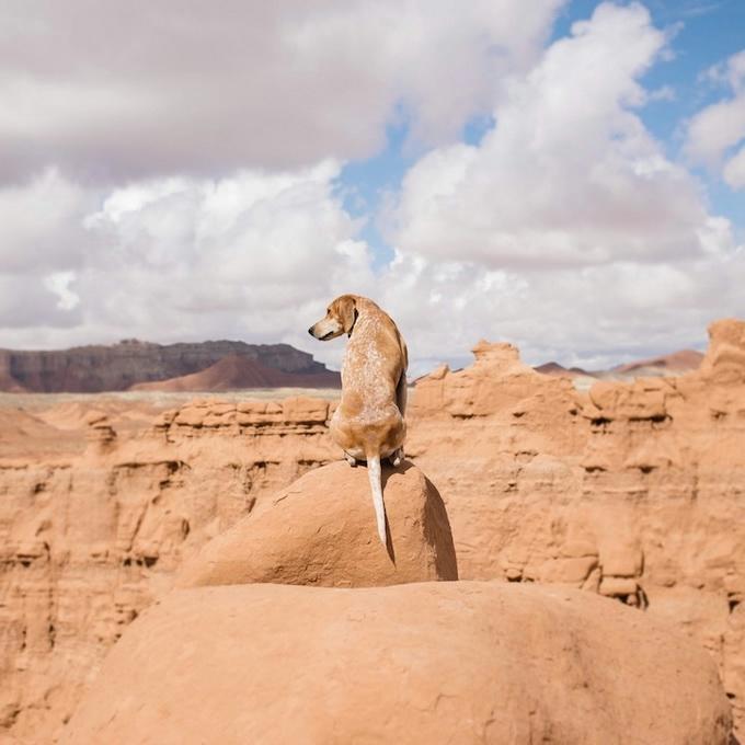 балансирующая собака мэдди фото 3 (680x680, 159Kb)