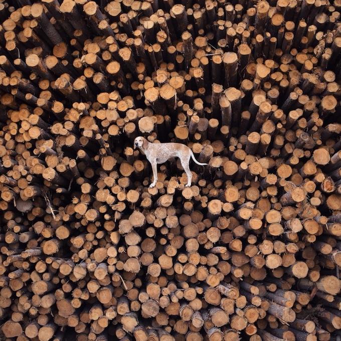 балансирующая собака мэдди фото 5 (680x680, 453Kb)