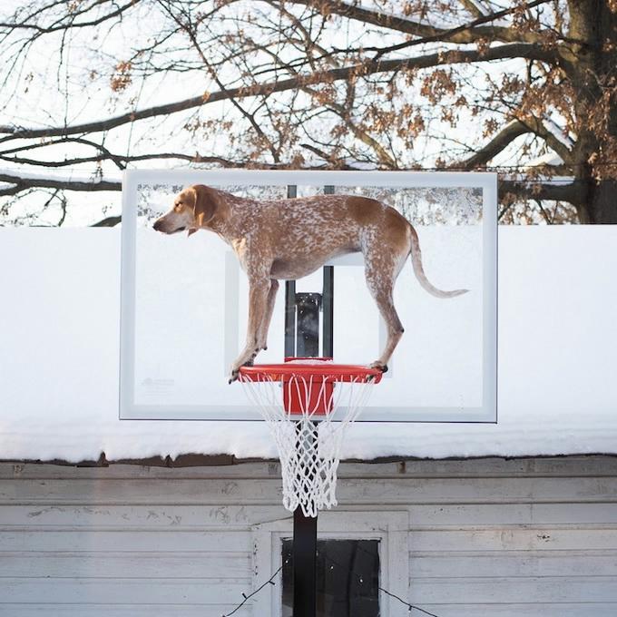 балансирующая собака мэдди фото 7 (680x680, 289Kb)