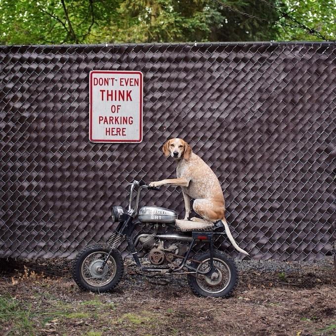 балансирующая собака мэдди фото 11 (680x680, 492Kb)