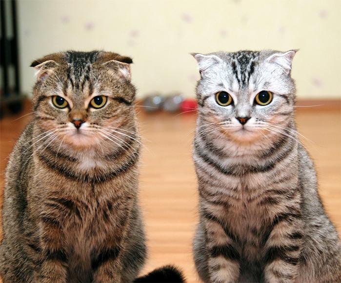 Жили были  Он и ОНА! Из жизни котов и кошек!/4059776_0_2a49b_637b807e_XL (700x581, 157Kb)