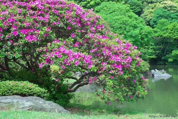 Сад Рикугиэн Rikugien garden (яп. 六義園 Рикугиэн) 9 (700x467, 419Kb)