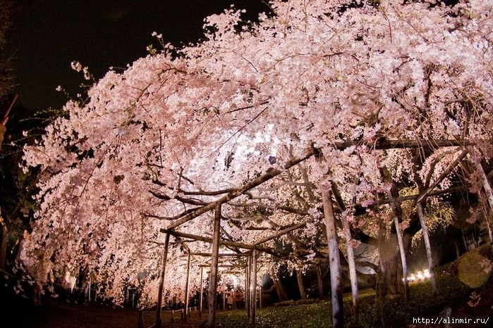 Сад Рикугиэн Rikugien garden (яп. 六義園 Рикугиэн) 8 (700x466, 385Kb)