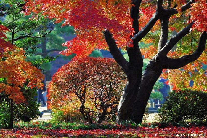 Сад Рикугиэн Rikugien garden (яп. 六義園 Рикугиэн) 7 (700x465, 439Kb)