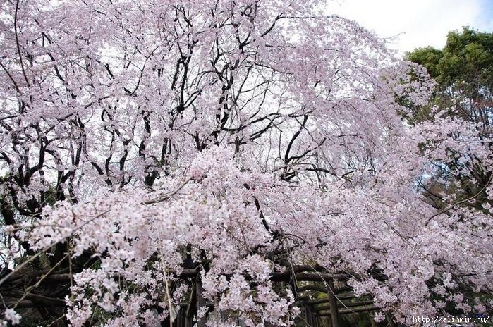 Сад Рикугиэн Rikugien garden (яп. 六義園 Рикугиэн) 5 (700x464, 408Kb)