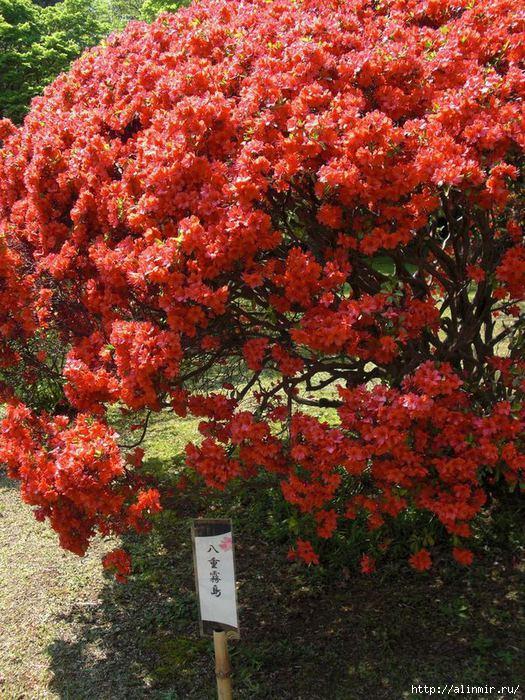 1386350327_Sad_Rikugiyen_Rikugien_garden_yap__Rikugiyen_21 (525x700, 328Kb)