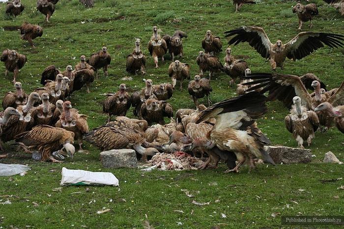 обряд небесного погребения тибет 18 (700x467, 336Kb)