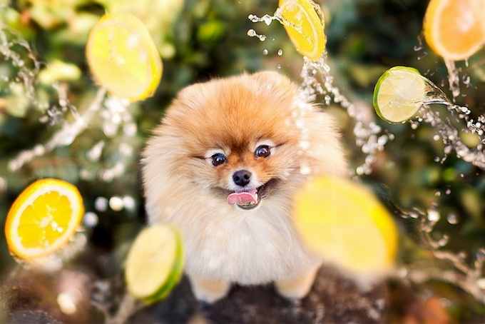 смешные фото собак 2 (680x454, 193Kb)